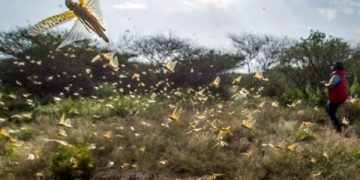 Locusts have already invaded Karamoja region.